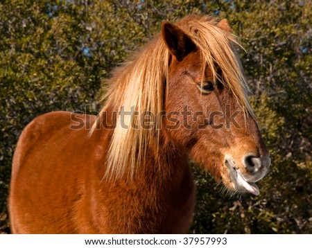 Horse tongue - stock photo