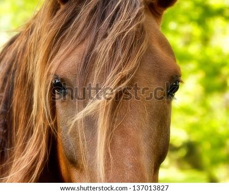 Horse Watching - stock photo