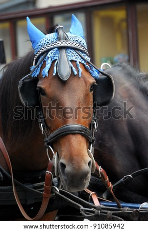 horse with a blue cap - stock photo