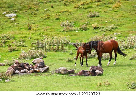 Horse with a foal - stock photo