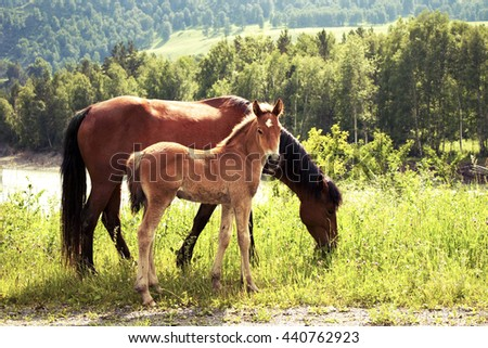 Horse with a foal on the meadow - stock photo