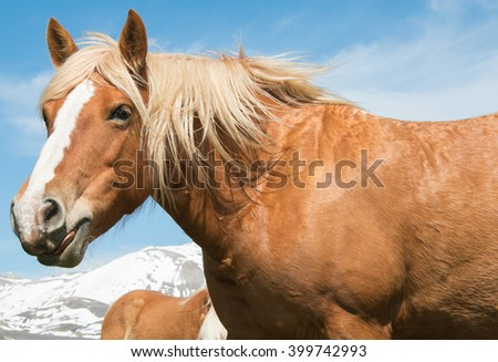 Horse with tongue far out of his mouth - stock photo
