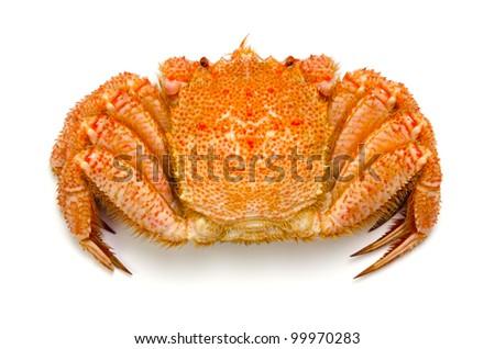 horsehair crab - stock photo