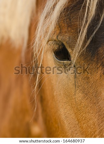 Horsehead close up with eye - stock photo