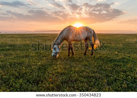 Horses and beautiful sunset.Image contain certain grain or noise,selective focus. - stock photo