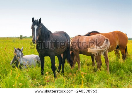 Horses and Foals in Spring Pasture - stock photo