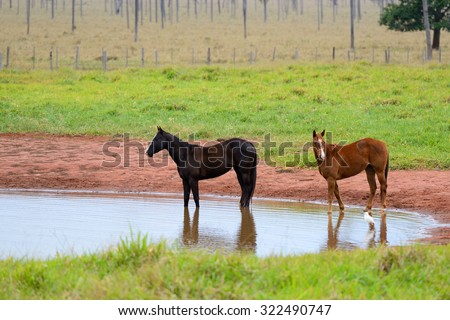 horses and the lake - stock photo