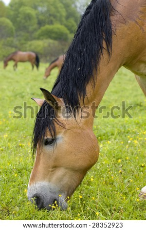 Horses are eating grass on the meadow - stock photo