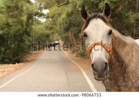 Horses at Princes island ( Buyukada - Big Island) ,  Istanbul, Turkey - stock photo