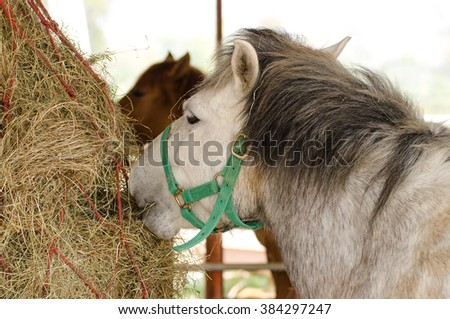 Horses eating hay - stock photo
