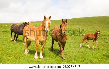 Horses family walking on the park - stock photo