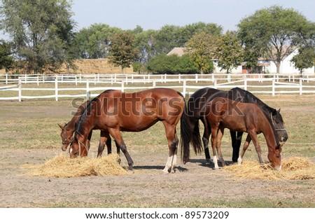 horses farm scene - stock photo