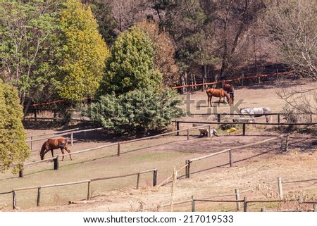 Horses Field Paddocks Animal equestrian horses ponies in paddock. - stock photo