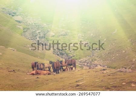 Horses graze in the pasture - instagram style - stock photo