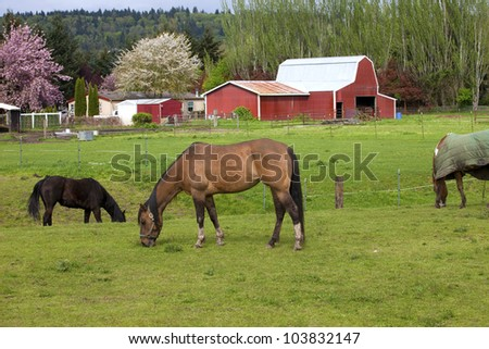Horses grazing in a field and barn in Woodland WA. - stock photo