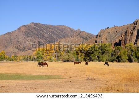 Horses grazing in prairies in Wyoming - stock photo