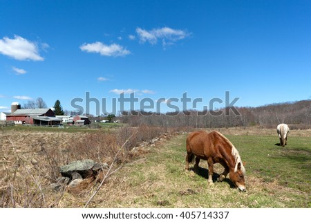 Horses Grazing in the Pasture - stock photo