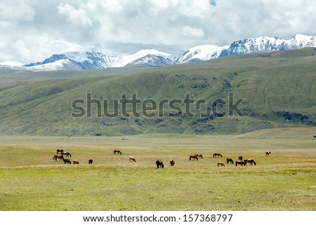 Horses grazing near stream in mountains, Tien Shan, Kyrgyzstan - stock photo