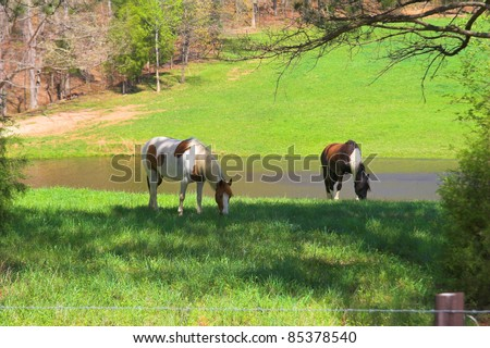 Horses grazing on a hill side in Tennessee - stock photo