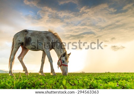 horses grazing on pasture at sundown in orange sunny beams - stock photo
