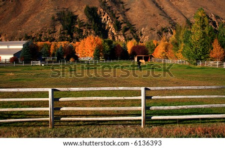 Horses grazing on peaceful autumn morning in Idaho - stock photo