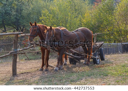Horses harnessed to a cart on the farm. Animals - stock photo