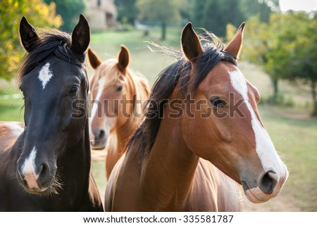 Horses in a meadow, Dordogne, France. - stock photo
