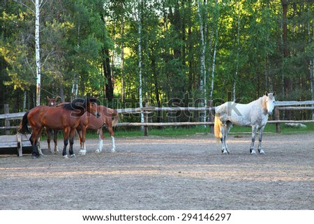 Horses in a paddock on a clear summer day - stock photo