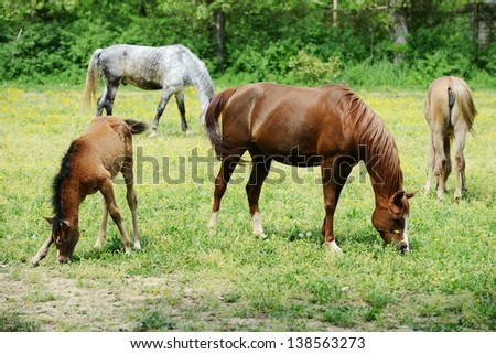 Horses in field - stock photo
