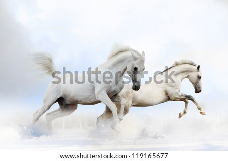 horses in snow - stock photo
