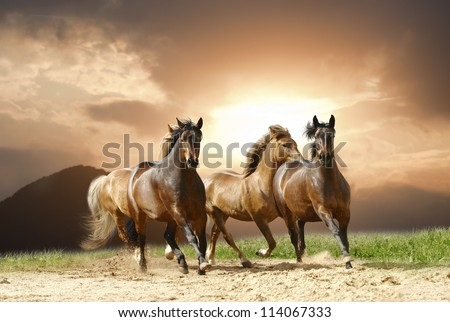 horses in summer - stock photo