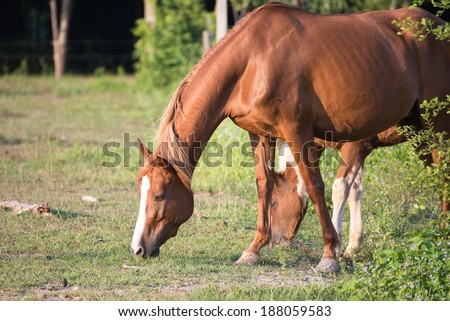 Horses in the field - stock photo