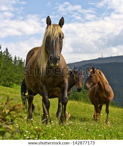 Horses in the meadow - stock photo