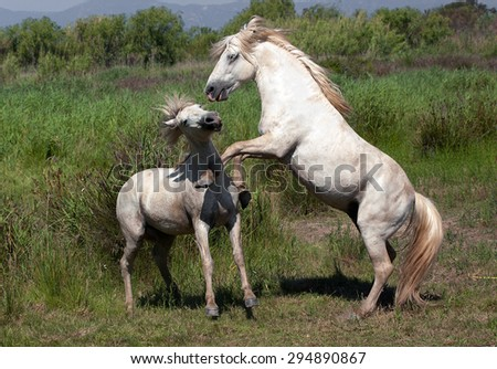 Horses in the nature - stock photo