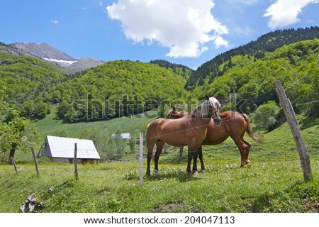 Horses in the Wilds of the Pyrenees. - stock photo