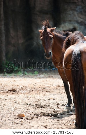 Horses in the zoo - stock photo