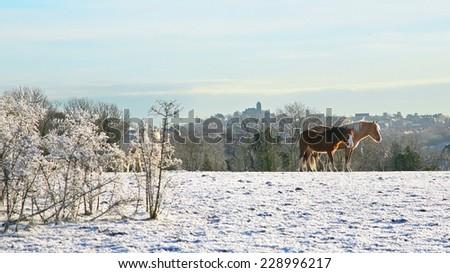 horses in winter - stock photo