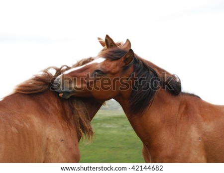 horses love and embracie each other - stock photo