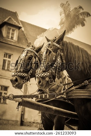 Horses of wedding carriage in Cracow ( Krakow ), Poland - stock photo