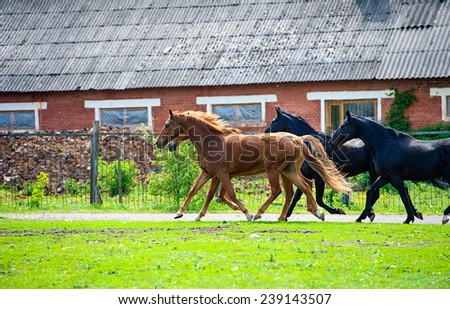 Horses on a farm - stock photo