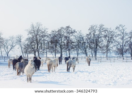 Horses on a farm in winter - stock photo
