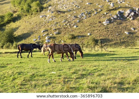 horses on a meadow - stock photo