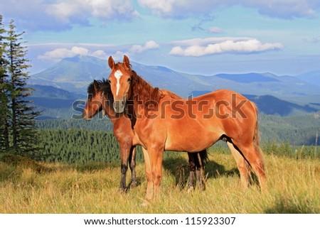 Horses on a summer mountain pasture. - stock photo
