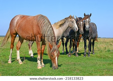 Horses on a summer pasture - stock photo