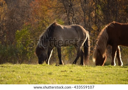 horses on sunny summer pasture  - stock photo