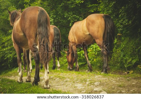 horses on the forest road - stock photo