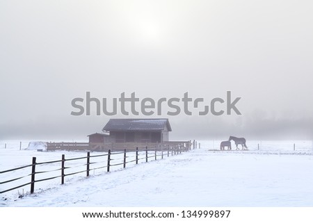 horses on winter pasture during cold misty morning - stock photo