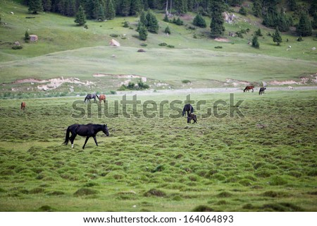 Horses pasturing and feeding grass in the field - stock photo