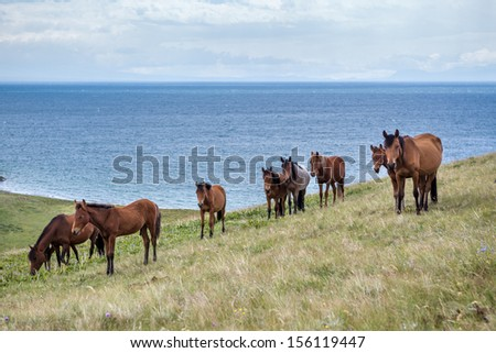 Horses pasturing at the lake Song Kul, Tien Shan, Kyrgyzstan - stock photo