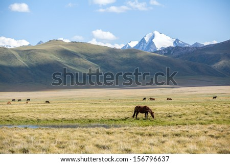 Horses pasturing in mountain valley - stock photo